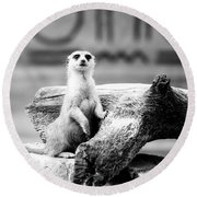 Little Meerkat Round Beach Towel by Pati Photography