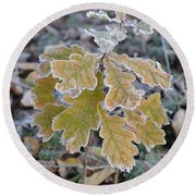 Round Beach Towel featuring the photograph Little Oak by Felicia Tica