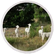 Llamas Standing In A Forest Round Beach Towel