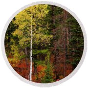 Lone Aspen In Fall Round Beach Towel