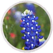 Lone Bluebonnet Round Beach Towel