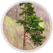 Round Beach Towel featuring the photograph Lone Pine by Les Palenik
