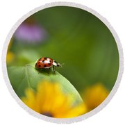 Round Beach Towel featuring the photograph Lonely Ladybug by Christina Rollo