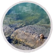 Lonely Shell Round Beach Towel by Patricia Greer