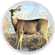 Round Beach Towel featuring the photograph Lonesome Doe Sunset by Barbara Chichester