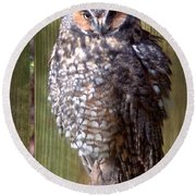 Round Beach Towel featuring the photograph Long Eared Owl by Joseph Skompski