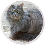 Long Haired Gray Cat Art Prints Round Beach Towel