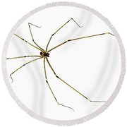 Long-legged Spider Round Beach Towel