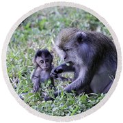 Round Beach Towel featuring the photograph Long Tailed Macaque Family by Shoal Hollingsworth