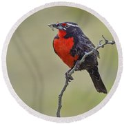 Long-tailed Meadowlark Round Beach Towel