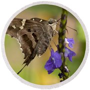 Round Beach Towel featuring the photograph Long-tailed Skipper Photo by Meg Rousher