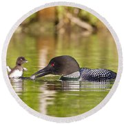 Loon Chick Excited For Breakfast Round Beach Towel