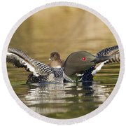 Loon Chick Hold On Round Beach Towel