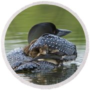 Loon Chick - Peek A Boo Round Beach Towel