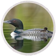Loon Chick With Parent - Quiet Time Round Beach Towel