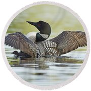 Loon Wing Spread With Chick Round Beach Towel