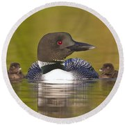 Loon With Two Chicks Round Beach Towel