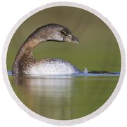 Round Beach Towel featuring the photograph Loss-neck Grebe by Bryan Keil