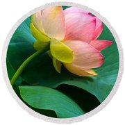 Lotus Blossom And Leaves Round Beach Towel by Byron Varvarigos