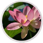 Lotus - Flowers Round Beach Towel