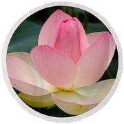Round Beach Towel featuring the photograph Lotus In Bloom by Byron Varvarigos