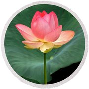 Lotus Of Late August Round Beach Towel by Byron Varvarigos