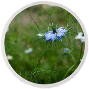 Love In A Mist Round Beach Towel by Liz  Alderdice