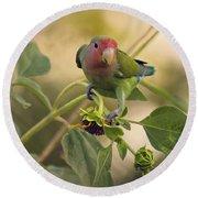 Lovebird On  Sunflower Branch  Round Beach Towel