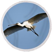 Low Angle View Of A Eurasian Spoonbill Round Beach Towel by Panoramic Images