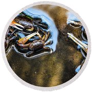 Low Tide Breakfast  Round Beach Towel by Mary Ward