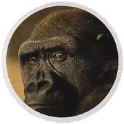 Lowland Gorilla Round Beach Towel by Frans Lanting MINT Images