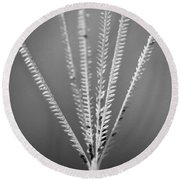 Round Beach Towel featuring the photograph Loxahatchee Grass by Bradley R Youngberg