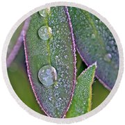 Lupin Leaves And Waterdrops Round Beach Towel
