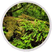 Lush Temperate Rainforest Round Beach Towel