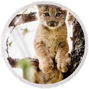 Lynx Kitten In Tree Round Beach Towel