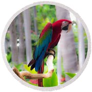 Round Beach Towel featuring the photograph Macaw by Angela DeFrias