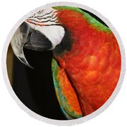Round Beach Towel featuring the photograph Macaw Profile by John Telfer