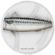 Mackerel Scomber Scombrus  - Maquereau - Caballa - Sarda - Scombro - Makrilli - Seafood Art Round Beach Towel