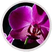 Magenta Orchid Round Beach Towel