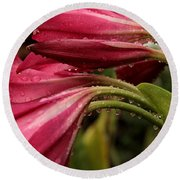 Round Beach Towel featuring the photograph Magenta Rain by Greg Allore