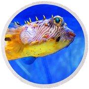 Magic Puffer - Fish Art By Sharon Cummings Round Beach Towel