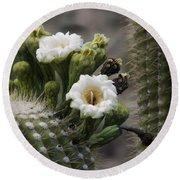 Round Beach Towel featuring the photograph Magnificant Bloom Of The Saguaro by Lucinda Walter