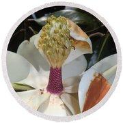 Magnolia Magnicence  Round Beach Towel