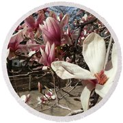 Round Beach Towel featuring the photograph Magnolia Branches by Caryl J Bohn