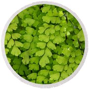 Maidenhair Fern Round Beach Towel