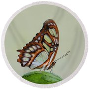Round Beach Towel featuring the photograph Malachite Butterfly #5 by Judy Whitton