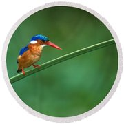 Malachite Kingfisher Tanzania Africa Round Beach Towel