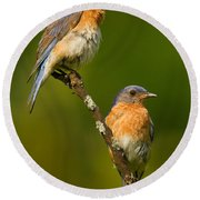 Male And Female Bluebirds Round Beach Towel by Jerry Fornarotto