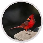 Male Cardinal Round Beach Towel by Gary Langley