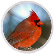 Round Beach Towel featuring the photograph Male Cardinal  by Kerri Farley